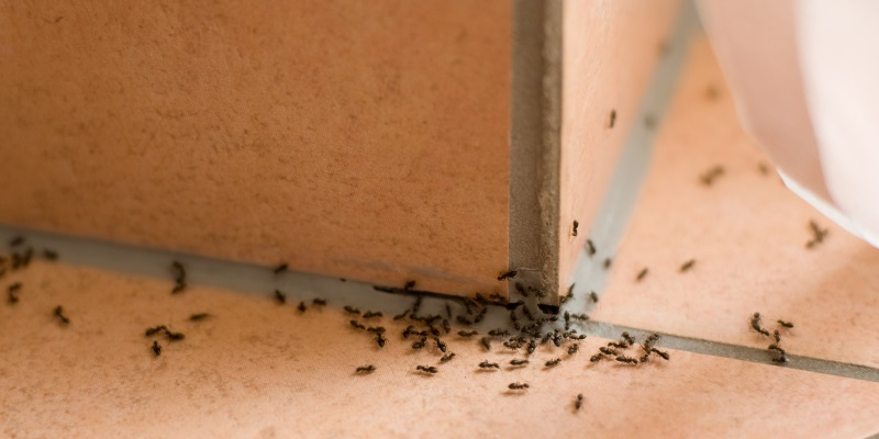 Ant Removal in Carlisle  - Ask for Ant Control from Carlisle City Control